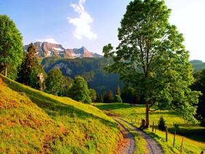 Camino verde hacia los picos nevados