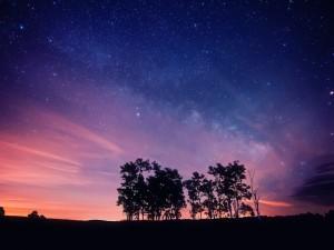 Árboles en un anochecer estrellado