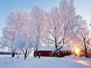 Casa y árboles en un paraje nevado