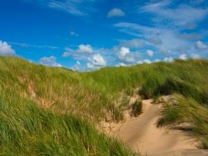 Follaje verde creciendo en las dunas