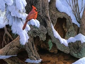 Cardenal rojo en un árbol nevado