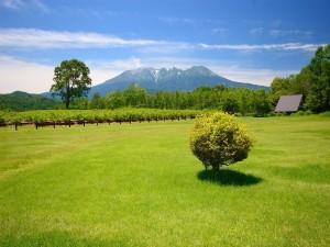 Paisaje natural con pastizales verdes y montañas