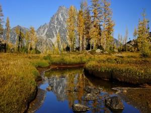 Árboles del otoño al pie de las montañas rocosas