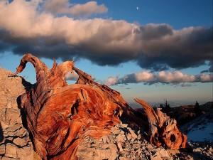 Troncos de árbol sobre las rocas