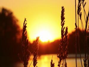 Sol iluminando el cielo al amanecer