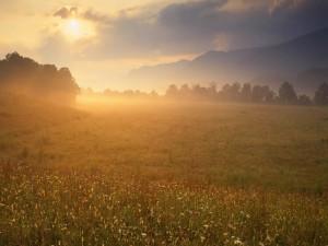 Niebla sobre el campo al amanecer