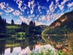 Flores y árboles junto al lago