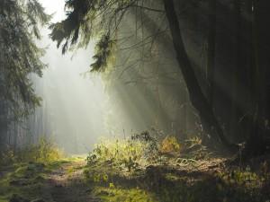 Luz solar en el interior del bosque