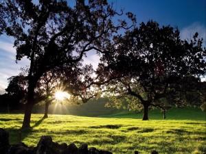 Sol iluminando la hierba y los árboles