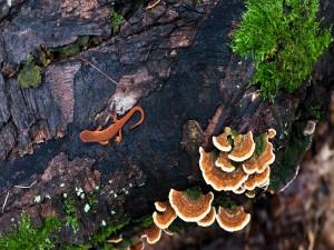 Bonita salamandra en el tronco de un árbol