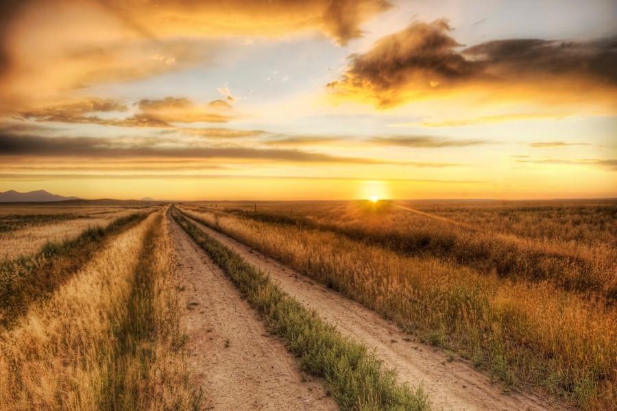 Contemplando el amanecer desde un camino campestre
