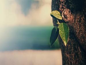 Hojas verdes brotando en el tronco de un árbol