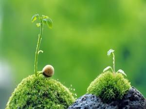 Brotes verdes creciendo