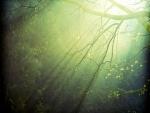 Ramas iluminadas por el sol