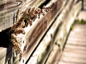 Flores entre láminas de madera