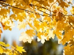 Hojas amarillas en las ramas de un árbol