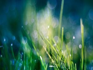 Destellos en la hierba