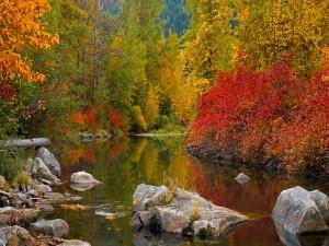 Árboles otoñales y rocas junto a un río