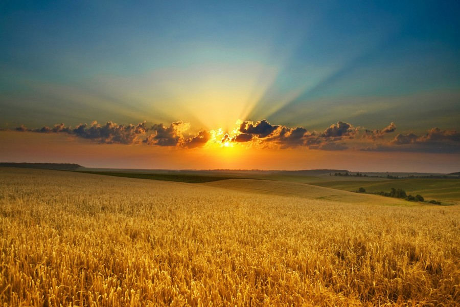Sol en el cielo iluminando el campo
