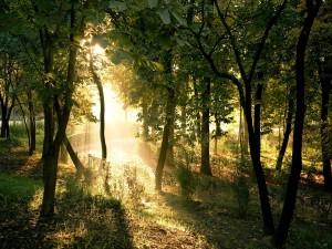 Fuerte luz iluminando el camino de un parque