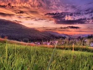 Amanecer visto sobre la hierba