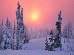 Bonito cielo en un paisaje nevado