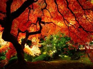 Un hermoso árbol