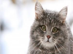 Hermoso gato con copos de nieve sobre el pelo