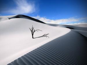 Árbol desnudo en el desierto