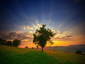 Sol tras un árbol