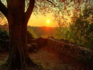 Sol frente a un árbol
