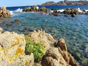 Flores en una roca marina