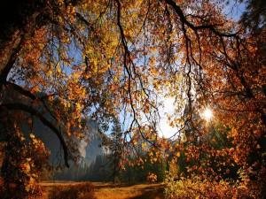 Sol tras las ramas de un árbol otoñal
