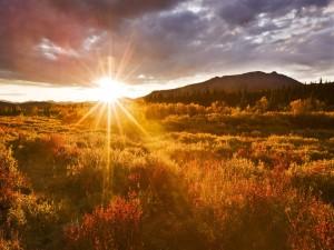Radiante sol iluminando las plantas