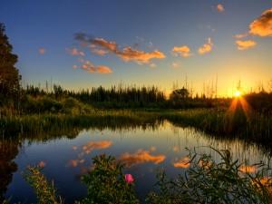 Sol iluminando un estanque con plantas y flores