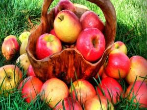 Manzanas maduras en una cesta sobre la hierba