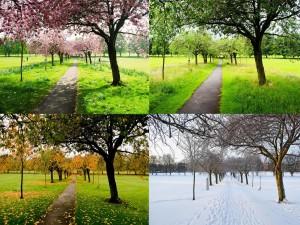 Las cuatro estaciones en un mismo parque