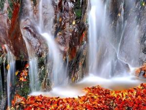 Hojas caídas bajo la cascada