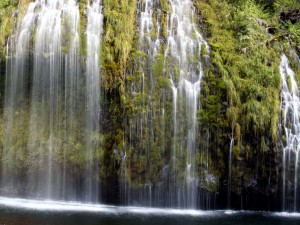 Saltos de agua sobre plantas