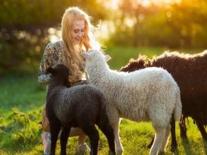 Acariciando a las ovejas