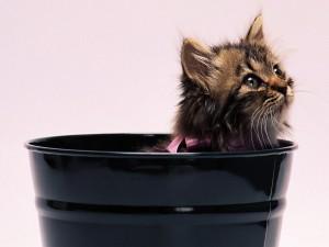 Gatito a la hora del baño