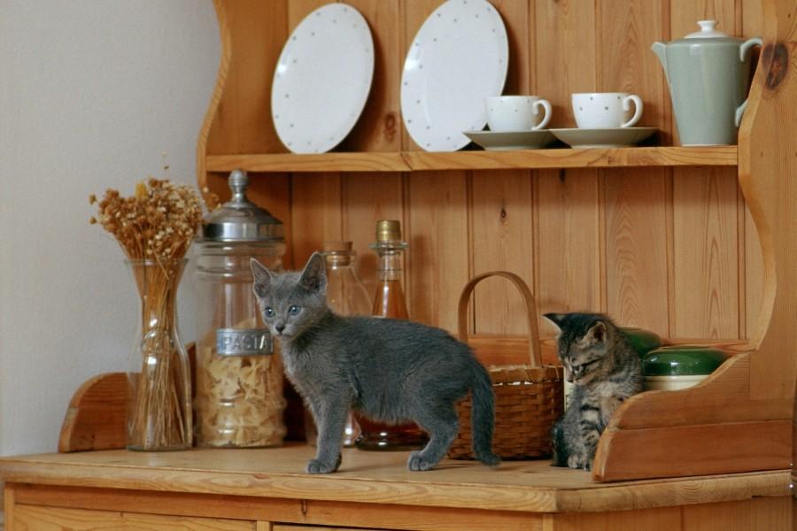 Gatos jugando en un armario de la cocina