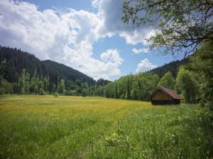 Cabaña en un verde prado