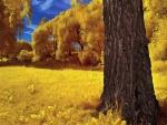 Atractiva vegetación en otoño