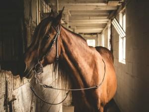 Hermoso caballo en el establo