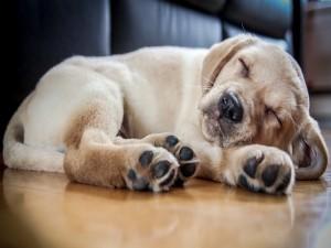 Cachorro durmiendo en el suelo
