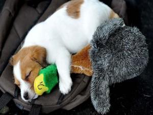 Perrito durmiendo con un peluche