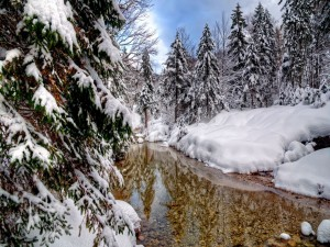 Río claro en el bosque nevado