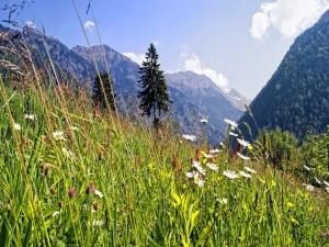 Hierba verde y flores silvestres en la montaña