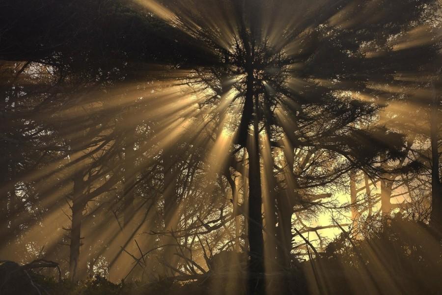 Rayos de sol filtrándose por las ramas de un gran árbol
